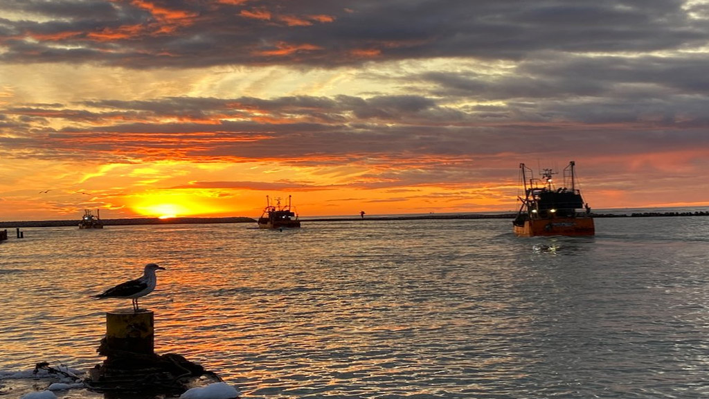 Poco tráfico marítimo y falta de contenedores ponen al límite la industria del langostino