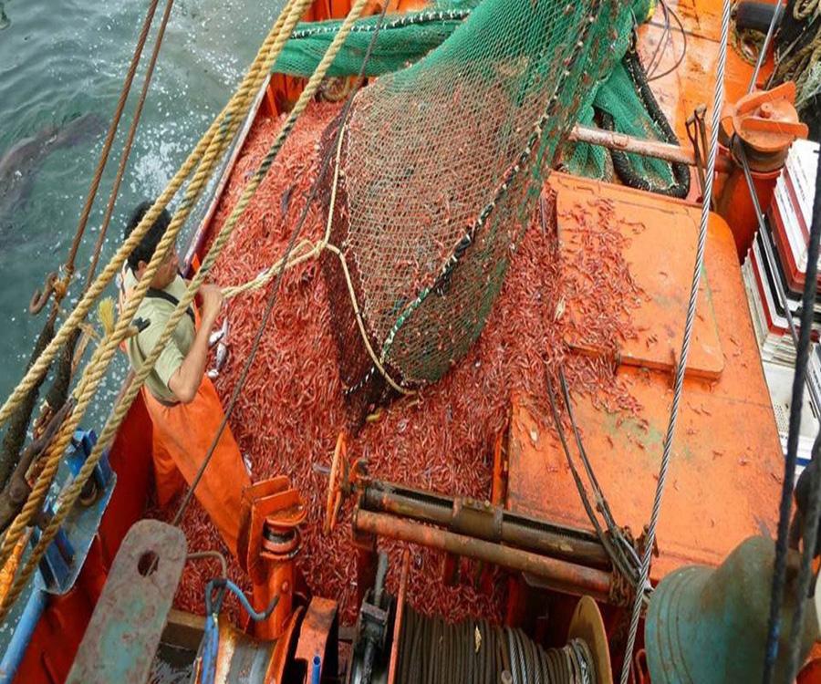 Satisfacción del sector pesquero por el acuerdo comercial con Brasil para exportar langostinos